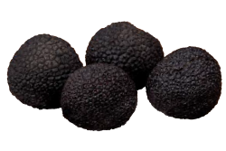 Premium Black Truffles angellozzi Super Extra Selection