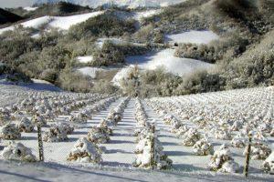 tartufaie angellozzi sotto la neve