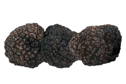 Summer Black Truffle angellozzi First Choice Selection