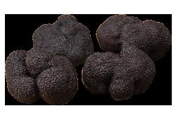 珍贵黑块菌 angellozzi 首选品