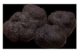 珍贵黑块菌 angellozzi 极品精选