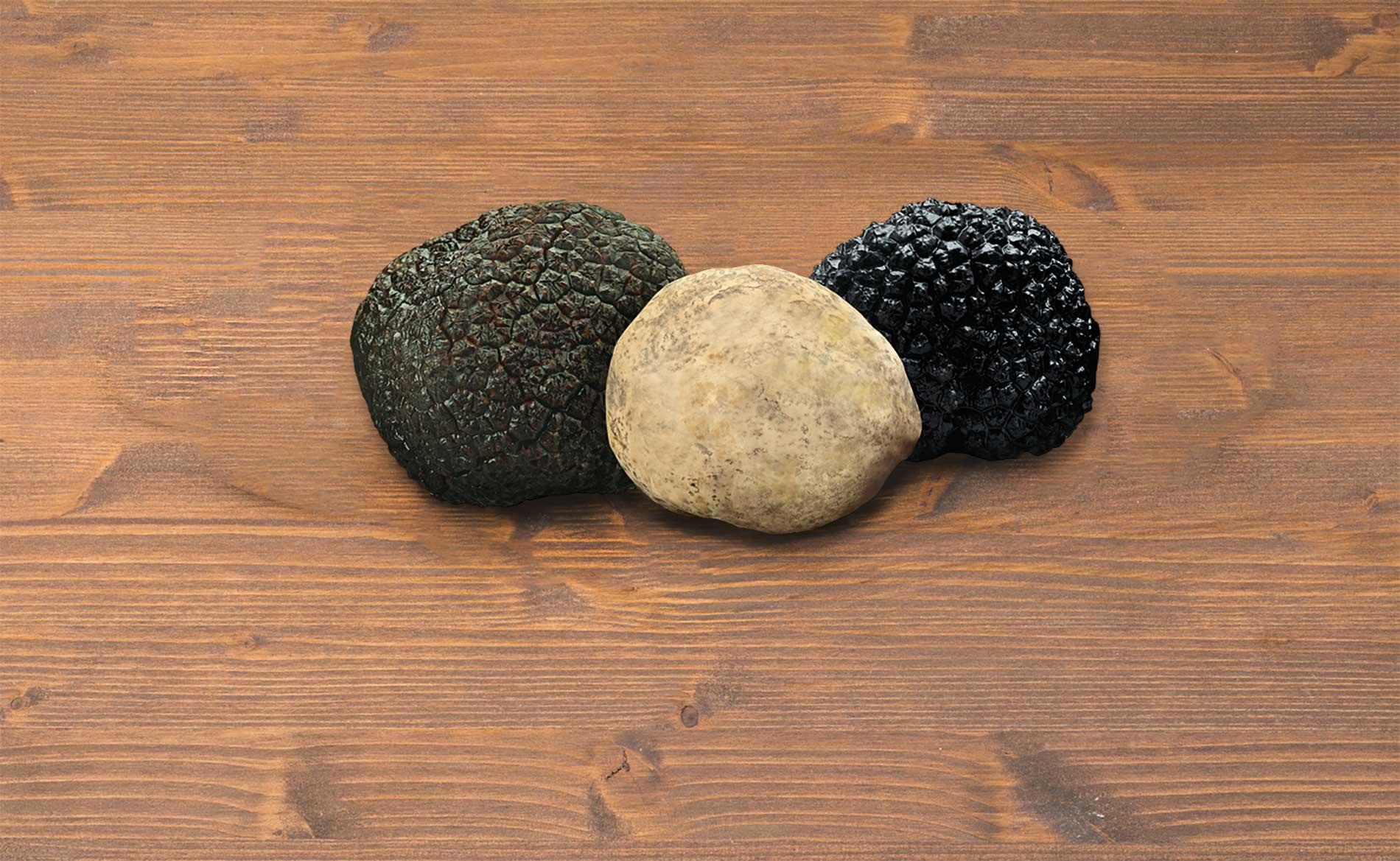 Le varietà di tartufo